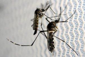 zika nyc